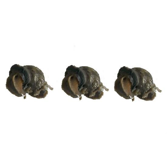 Escargot Cuit Sans Coquille 500gr